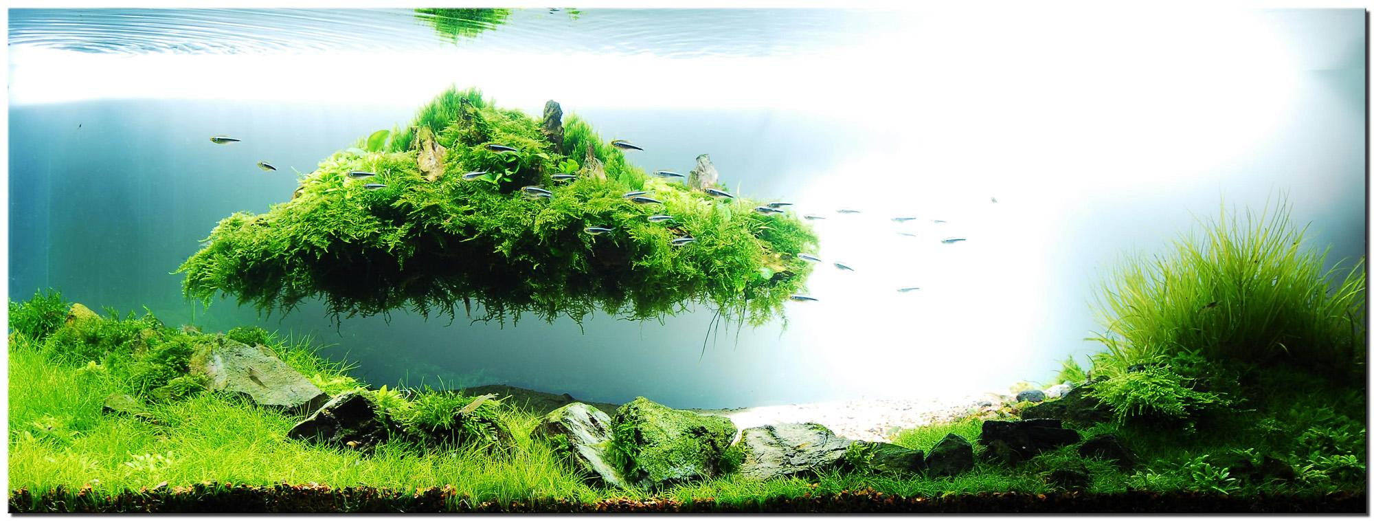 1_plantedtank_islandscape2